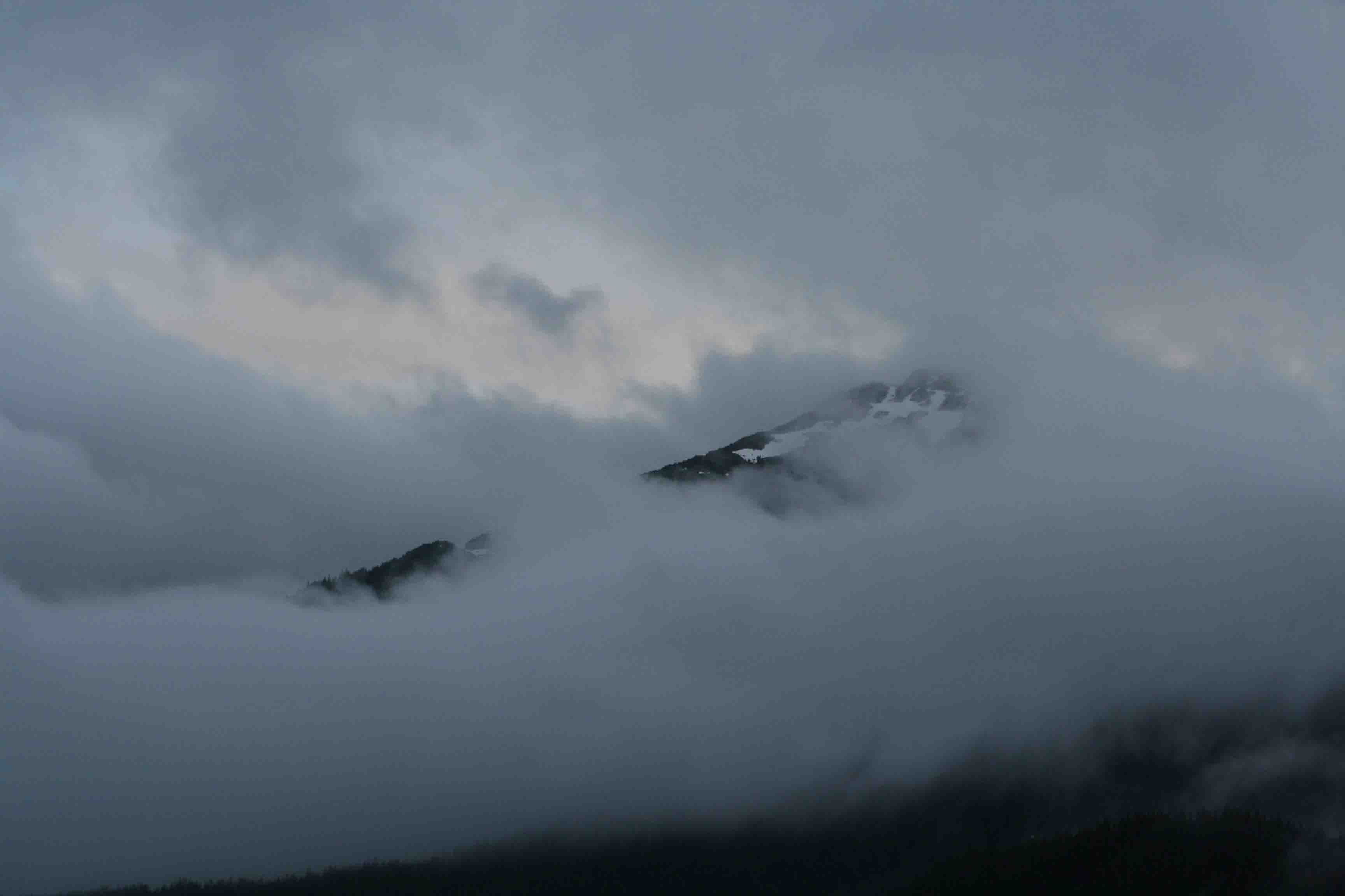 tree slope mountain fog HD wallpaper