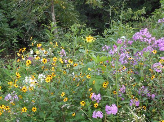wildflowers beauty2